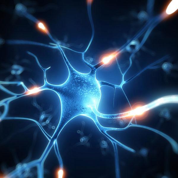 Sieć neuronowa